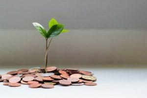 A plant that grows from money signifies that you need to spend money to get quality when shipping your belongings overseas.